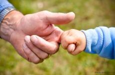 Àvies i néts