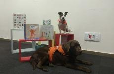 Contes i gossos: taller de lectura educatiu amb gossos