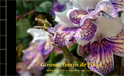 LLibre de Temps de Flors 2019